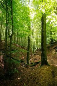Wildnisgebiet LBWH